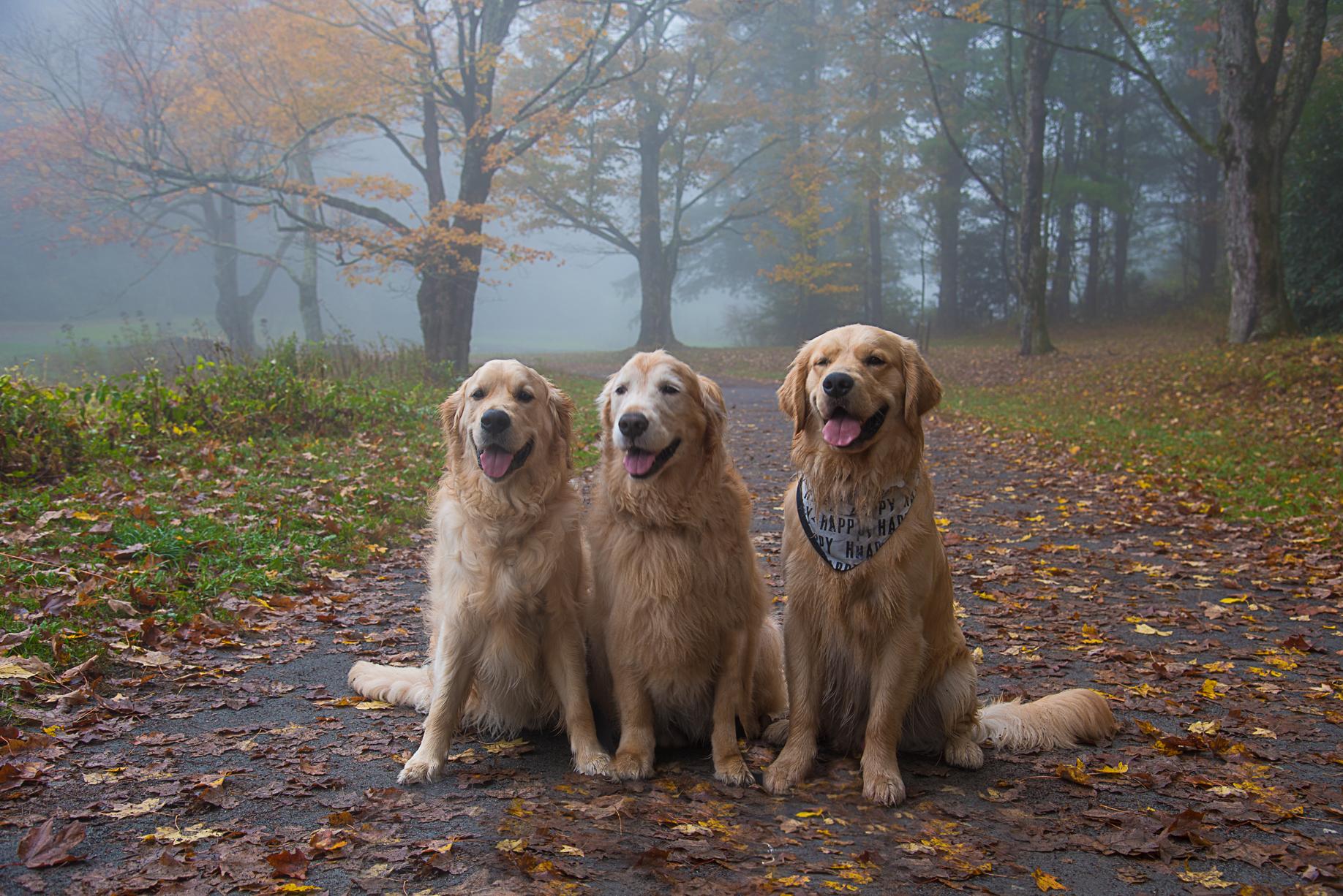 Koby, Kai and Oakley